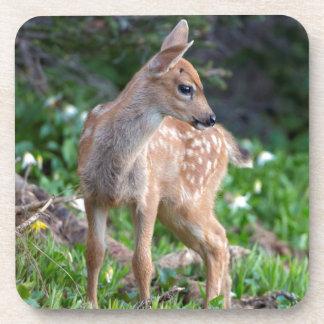 USA Washington State Blacktail Deer Fawn Coaster