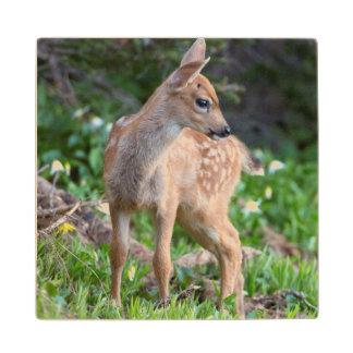 USA Washington State Blacktail Deer Fawn Wood Coaster