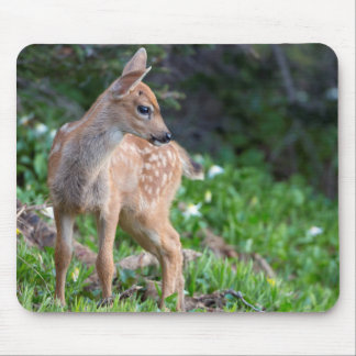 USA, Washington State. Blacktail Deer Fawn Mouse Pad