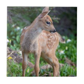 USA Washington State Blacktail Deer Fawn Ceramic Tile