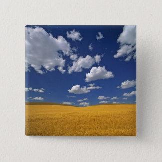 USA, Washington State, Colfax. Ripe barley meets Button