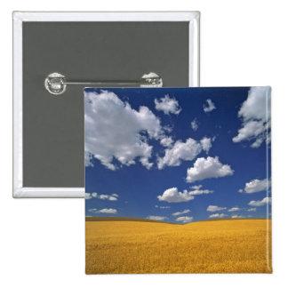 USA, Washington State, Colfax. Ripe barley meets Pins