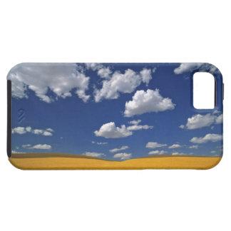 USA, Washington State, Colfax. Ripe barley meets iPhone SE/5/5s Case