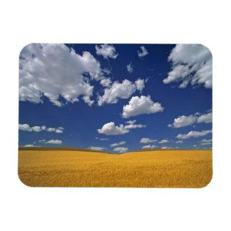 USA, Washington State, Colfax. Ripe barley meets Magnet