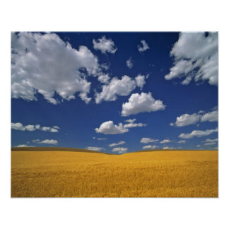 USA, Washington State, Colfax. Ripe barley meets Poster