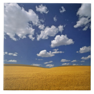 USA, Washington State, Colfax. Ripe barley meets Tile