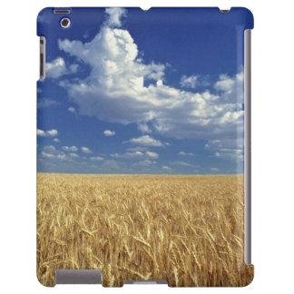 USA, Washington State, Colfax. Ripe wheat