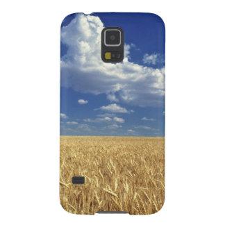 USA, Washington State, Colfax. Ripe wheat Case For Galaxy S5