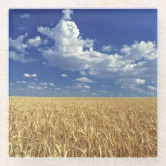 USA, Washington State, Colfax. Ripe wheat Glass Coaster