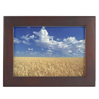 USA, Washington State, Colfax. Ripe wheat Keepsake Box