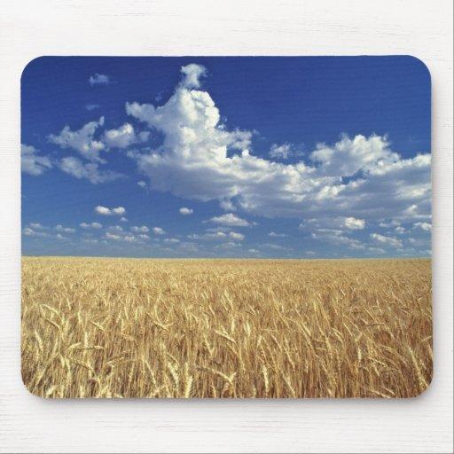 USA, Washington State, Colfax. Ripe wheat Mouse Pad