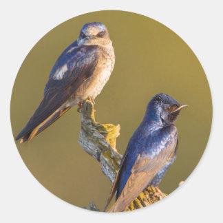 USA, Washington State. Female And Male Purple Classic Round Sticker