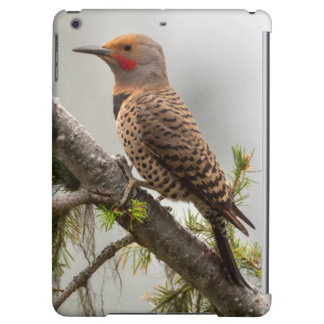 USA, Washington State. Male Northern Flicker 2 Case For iPad Air