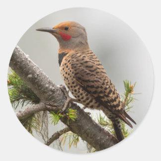 USA, Washington State. Male Northern Flicker 2 Classic Round Sticker