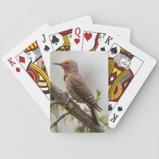 USA, Washington State. Male Northern Flicker 2 Playing Cards