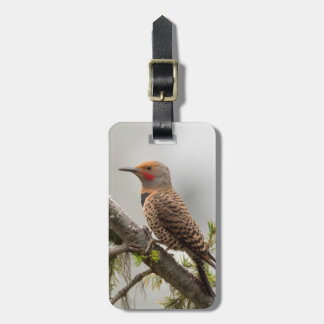 USA, Washington State. Male Northern Flicker 2 Tag For Luggage