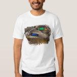 USA, Washington State, Mallard, male, flight. Shirt