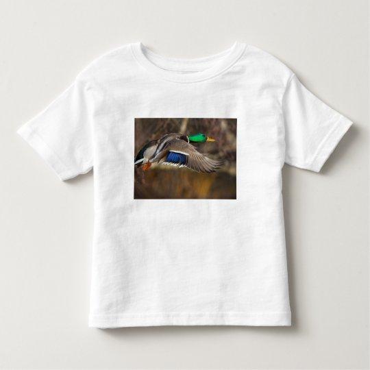 USA, Washington State, Mallard, male, flight. Toddler T-shirt