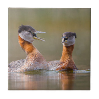 USA, Washington State. Mated Red-Necked Grebes Ceramic Tile
