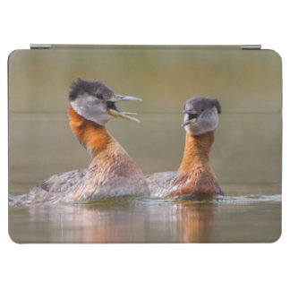 USA, Washington State. Mated Red-Necked Grebes iPad Air Cover