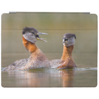 USA, Washington State. Mated Red-Necked Grebes iPad Cover