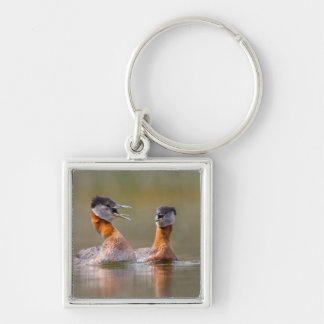 USA, Washington State. Mated Red-Necked Grebes Keychain
