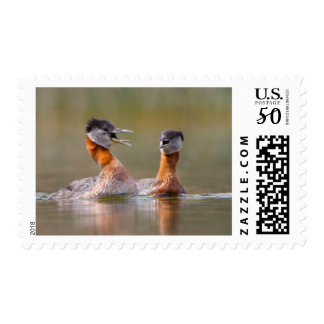 USA, Washington State. Mated Red-Necked Grebes Postage