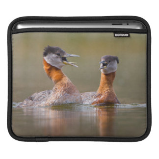 USA, Washington State. Mated Red-Necked Grebes Sleeves For iPads