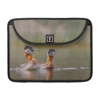USA, Washington State. Mated Red-Necked Grebes Sleeves For MacBook Pro