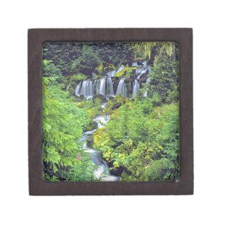 USA, Washington State, Mt Adams Wilderness. Twin Jewelry Box