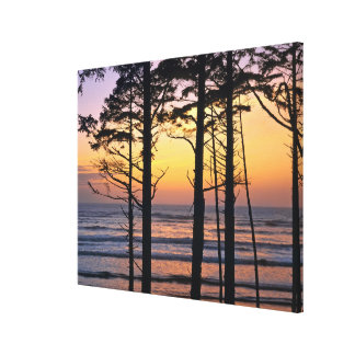 USA, Washington State, Olympic NP. Delicate Canvas Print