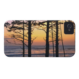 USA Washington State Olympic NP Delicate Blackberry Bold Covers
