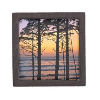 USA, Washington State, Olympic NP. Delicate Gift Box