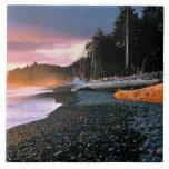 USA, Washington State, Olympic NP. Waves lap the Large Square Tile