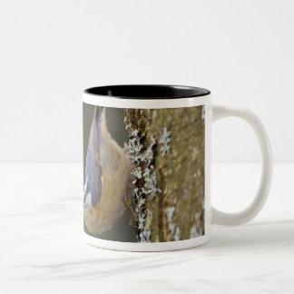 USA, Washington State, Red-brested Nuthatch, Two-Tone Coffee Mug