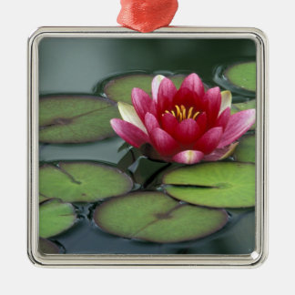 USA, Washington State, Seattle. Water lily and Metal Ornament