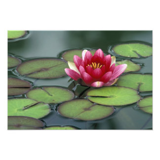 USA, Washington State, Seattle. Water lily and Photo Art