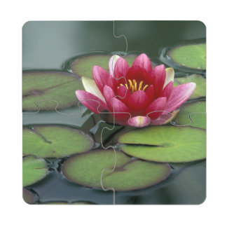 USA, Washington State, Seattle. Water lily and Puzzle Coaster