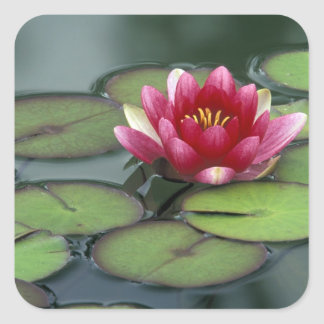 USA, Washington State, Seattle. Water lily and Square Stickers