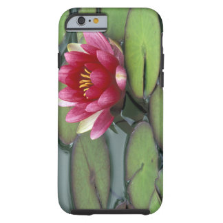 USA, Washington State, Seattle. Water lily and Tough iPhone 6 Case