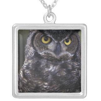 USA, Washington State, Seattle, Woodland Park Silver Plated Necklace