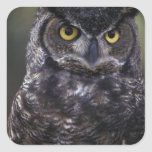 USA, Washington State, Seattle, Woodland Park Sticker