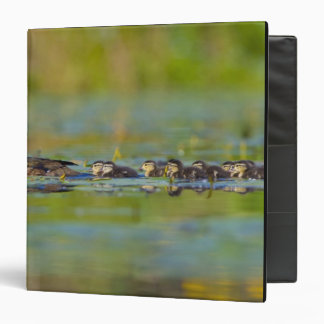 USA, Washington State, Wood Duck,female, 3 Ring Binder