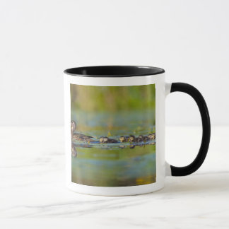USA, Washington State, Wood Duck,female, Mug