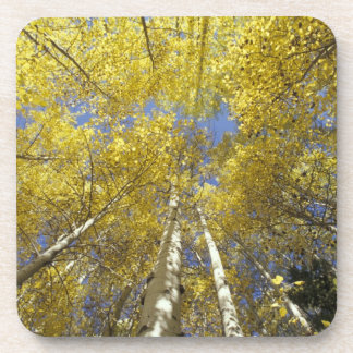 USA, Washington, Stevens Pass Fall-colored aspen Coaster