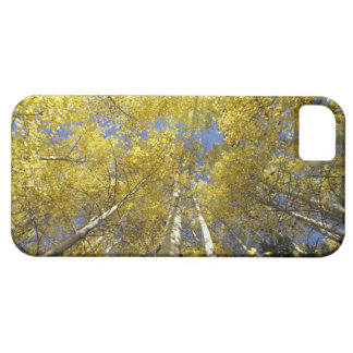 USA, Washington, Stevens Pass Fall-colored aspen iPhone SE/5/5s Case