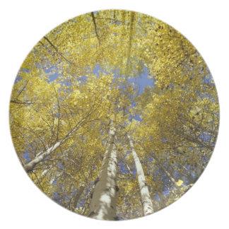 USA, Washington, Stevens Pass Fall-colored aspen Melamine Plate