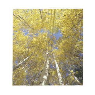 USA, Washington, Stevens Pass Fall-colored aspen Notepad