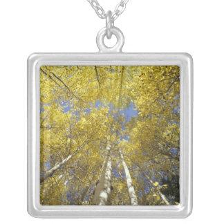 USA, Washington, Stevens Pass Fall-colored aspen Silver Plated Necklace