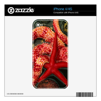 USA, Washington, Tongue Point. Blood star 2 Skin For The iPhone 4